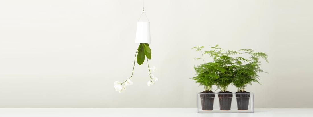 Boskke, een fabrikant uit Nieuw-Zeeland, staat bekend om zijn Sky Planter & the Cube plant pot. Koop hier in de winkel de bloempot die aan het plafond hangt en de transparante plantenpot.