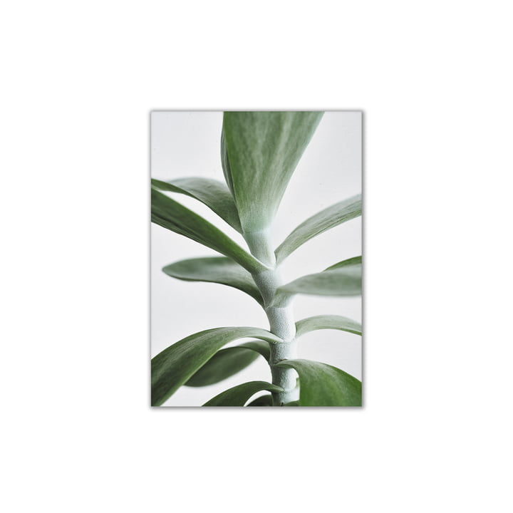 Papier Collectief - Green Home 04, 30 x 40 cm