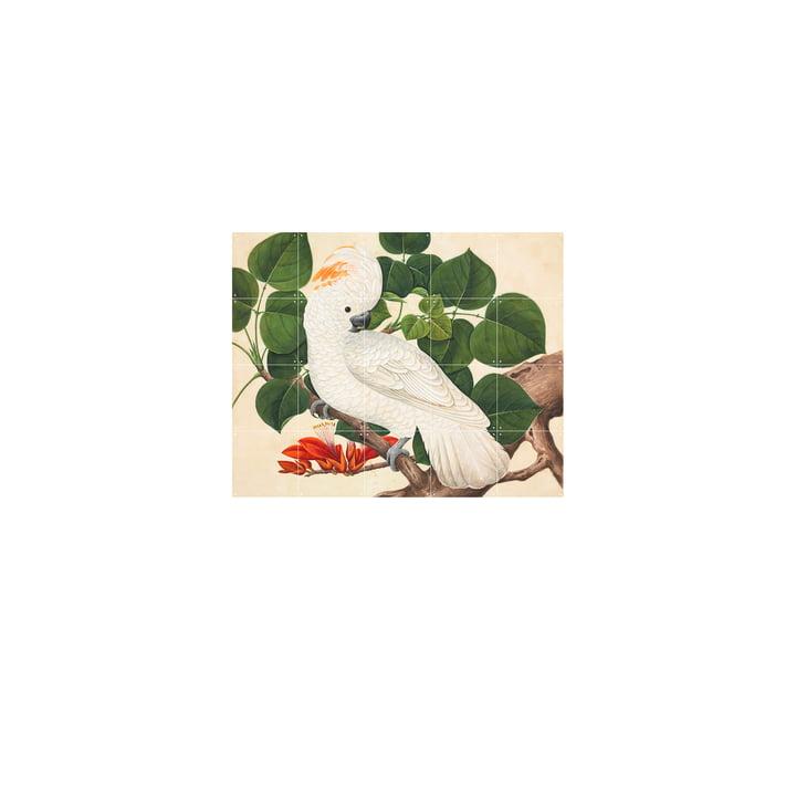 Salom-Crested Cockatoo 80 x 100 cm bij IXXI